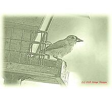 Titmouse Sumi-e Photographic Print