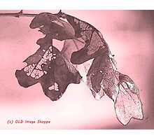 Oak Sumi-e Photographic Print