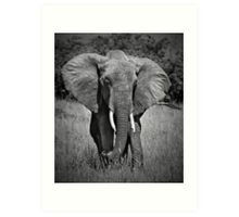 Elephant in Amboseli Art Print