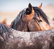 Wild Mustangs of Utah - 2015 by Kelly Jay