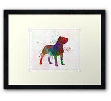 Staffordshire Bull Terrier in watercolor Framed Print