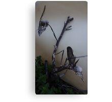 Two dead bird skulls in one dead tree Canvas Print