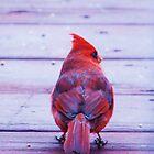 cardinal by ANNABEL   S. ALENTON