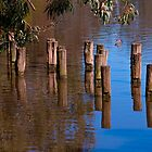 Poles in Playford Lake by indiafrank