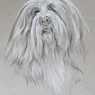 Bearded Collie by BarbBarcikKeith