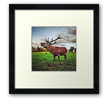 Red deer stag at Wollaton Hall Framed Print