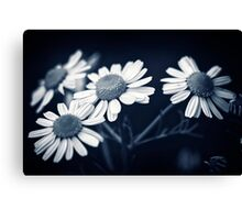 Just Daisies Canvas Print