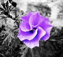 Hibiscus  by JustAnEffigy
