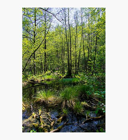 Trees in Briesetal, a flooded valley in Germany Photographic Print