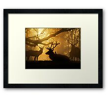 Stags Thawing Out After A Cold Night Framed Print