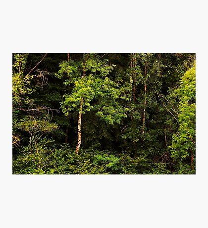 Autumn is still green Photographic Print