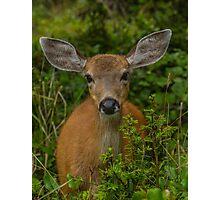 Hello My Deer! Photographic Print