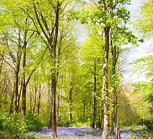 Bluebell Woods in Spring by Graham Prentice