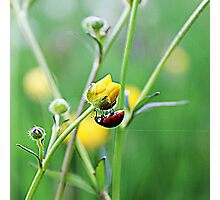 Good morning, Ladybird Photographic Print