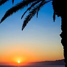Palm Tree Sunset by Fred McKie