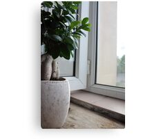Ginseng Plant Canvas Print