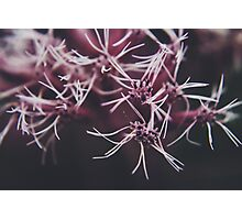 Strung Together Photographic Print