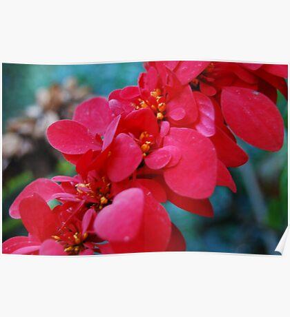 Hawaiian jungle flower Poster