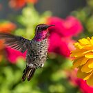 Male Visitor by Mike Herdering