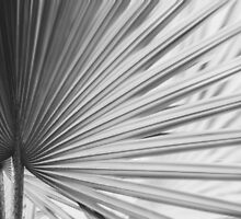 Palm Abstract no. 2 by Bethany Helzer