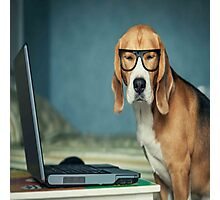 Beagle with glasses and laptop.Cute,cool,digital picture,beagle,dog,pet,laptop,glasses,modern,trendy,fun Photographic Print