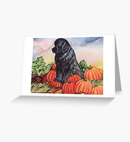 Newfie Harvest Greeting Card