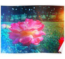 PINK ROSE VINTAGE INDIA Poster