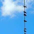Birds on a Wire by Barnbk02