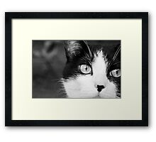 I'm not looking. Framed Print