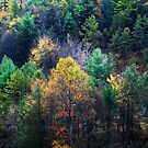 Take a Hike Autumn in Pennsylvania by AngieDavies