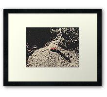 Meet Edward, lazy suricate (meerkat) Framed Print