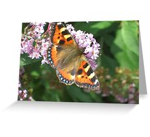 Monarch Butterfly on Lilac 1 Greeting Card