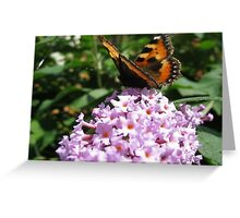 Monarch Butterfly on Lilac 3 Greeting Card