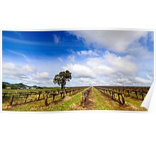Springtime in the Barossa Valley Vineyards Poster