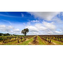 Springtime in the Barossa Valley Vineyards Photographic Print