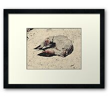 To rest young padawan master needs, disturb, thou shall not.  Yes, hmmm. Framed Print