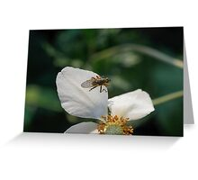 wasp on flower Greeting Card