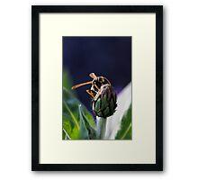 wasp on flower Framed Print