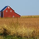 Red Barn In Autumn by lorilee