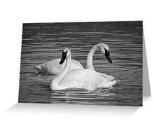 Pair of Trumpeter Swans Greeting Card