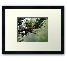 Pine Cones and Dew Framed Print
