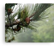 Pine Cones and Dew Metal Print