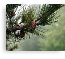 Pine Cones and Dew Canvas Print