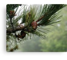 Pine Cones and Dew Canvas Print