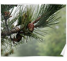 Pine Cones and Dew Poster