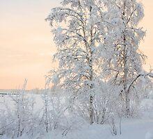 Winter walk by Eivor Kuchta
