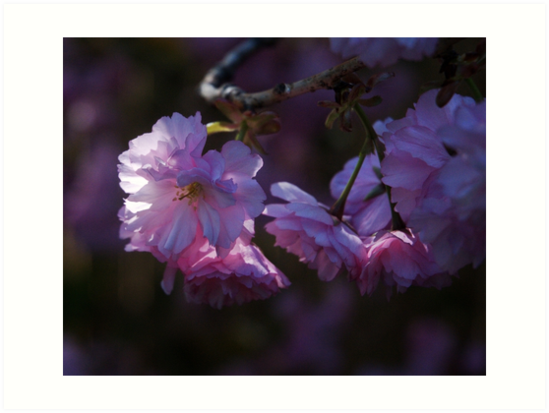 Blossoms by Barry Doherty