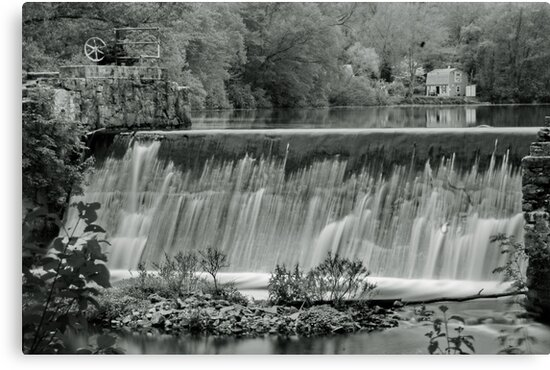 Late Spring (B&W) by Barry Doherty