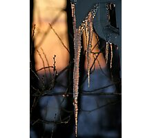 Winter Sunset Photographic Print