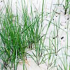 Grass on the beach by RosiLorz